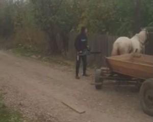 cal pentru site