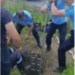 Misiune inedită a pompierilor și jandarmilor. Au scos un bursuc dintr-un puț