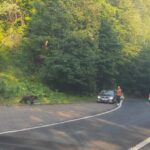 Urs la drumul mare la Harțagu. Comportament iresponsabil al șoferilor