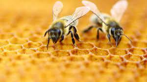 Apicultura în primejdie. Încă un an prost pentru producătorii de miere
